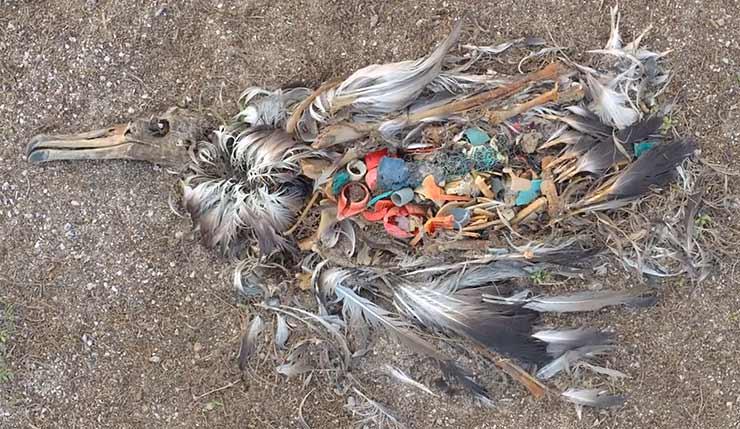 plast i havet film